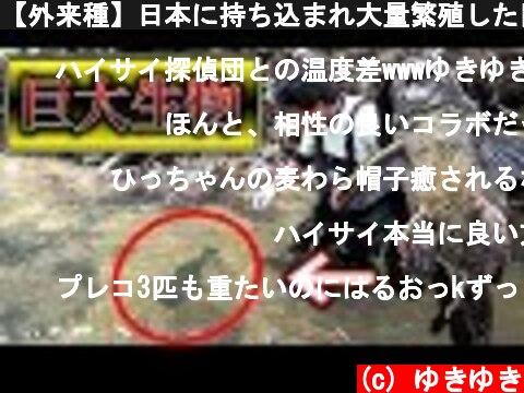 【外来種】日本に持ち込まれ大量繁殖した巨大生物を素手で捕獲した結果…  (c) ゆきゆき