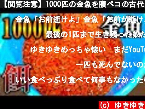 【閲覧注意】1000匹の金魚を腹ペコの古代魚水槽に入れてみたら...  (c) ゆきゆき