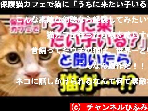 保護猫カフェで猫に「うちに来たい子いる?」って聞いたら、猫が…!?【猫の不思議な話】【朗読】  (c) チャンネルひふみ