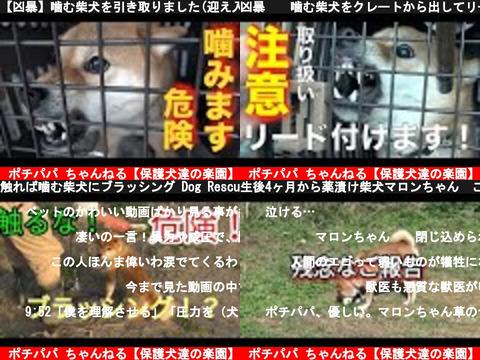 ポチパパ ちゃんねる【保護犬達の楽園】(おすすめch紹介)