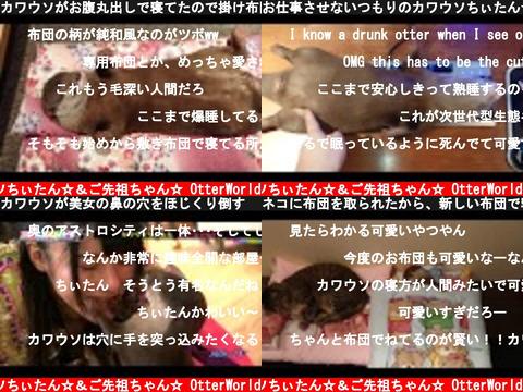 コツメカワウソちぃたん☆&ご先祖ちゃん☆ OtterWorld(おすすめch紹介)