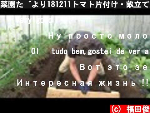 菜園だより181211トマト片付け・畝立て直し  (c) 福田俊