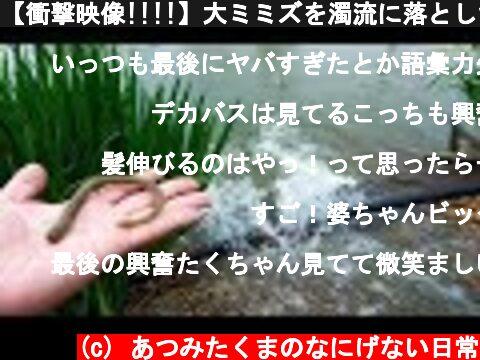 【衝撃映像!!!!】大ミミズを濁流に落としたらヤバすぎた!!!  (c) あつみたくまのなにげない日常