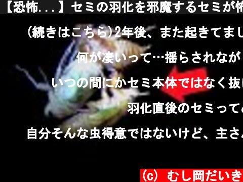 【恐怖...】セミの羽化を邪魔するセミが怖すぎた...  (c) むし岡だいき
