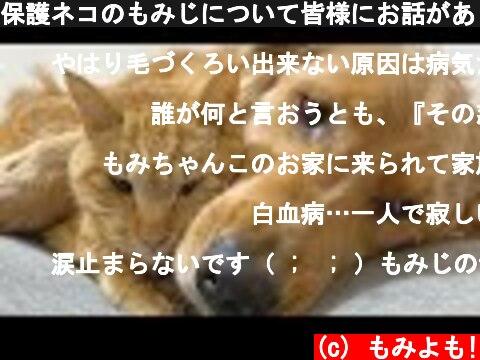 保護ネコのもみじについて皆様にお話があります  (c) もみよも!