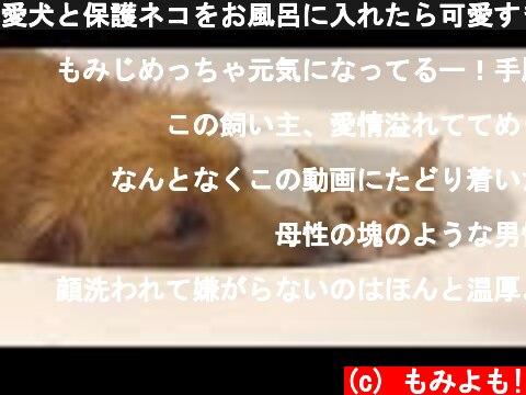愛犬と保護ネコをお風呂に入れたら可愛すぎて鼻血出るかと思った  (c) もみよも!
