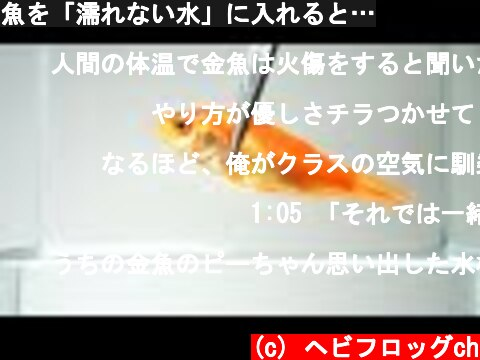 魚を「濡れない水」に入れると…  (c) ヘビフロッグch
