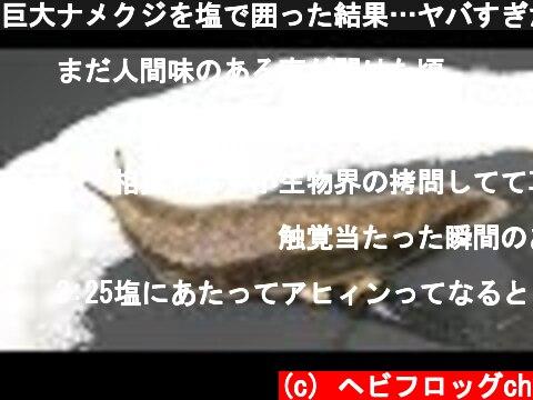巨大ナメクジを塩で囲った結果…ヤバすぎた!  (c) ヘビフロッグch