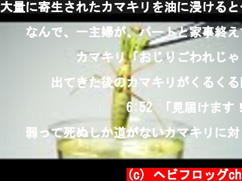 大量に寄生されたカマキリを油に浸けると…衝撃の結果に!  (c) ヘビフロッグch