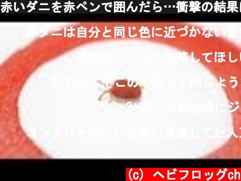 赤いダニを赤ペンで囲んだら…衝撃の結果に!  (c) ヘビフロッグch