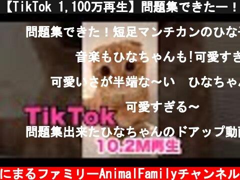 【TikTok 1,100万再生】問題集できたー!可愛すぎる子猫【#shorts】  (c) あにまるファミリーAnimalFamilyチャンネル