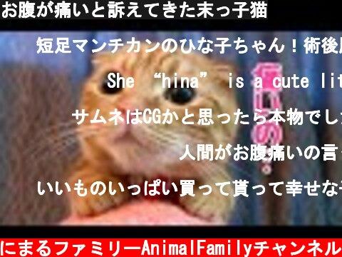 お腹が痛いと訴えてきた末っ子猫  (c) あにまるファミリーAnimalFamilyチャンネル