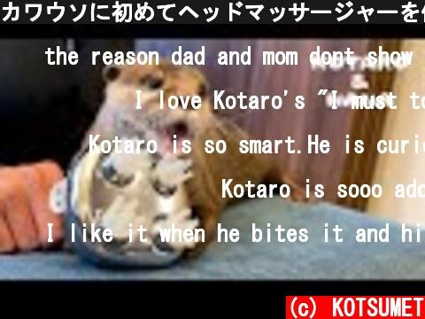 カワウソに初めてヘッドマッサージャーを使ってみた結果 Otter Reacts to Head Massager  (c) KOTSUMET