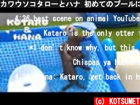 カワウソコタローとハナ 初めてのプールにテンション上がりまくり! Otter Kotaro&Hana Having Fun in The Pool  (c) KOTSUMET