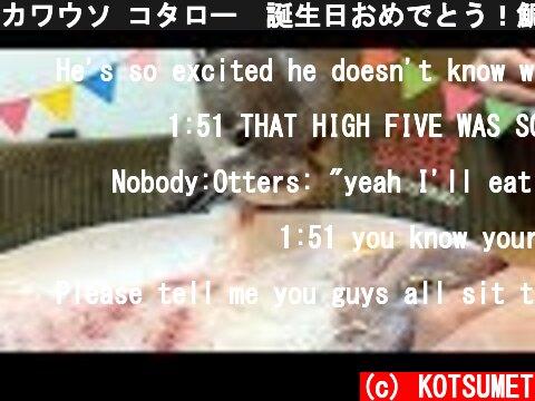 カワウソ コタロー 誕生日おめでとう!鯛の姿造りと刺身盛に大興奮!! Kotaro the Otter Happy 1st Birthday!  (c) KOTSUMET