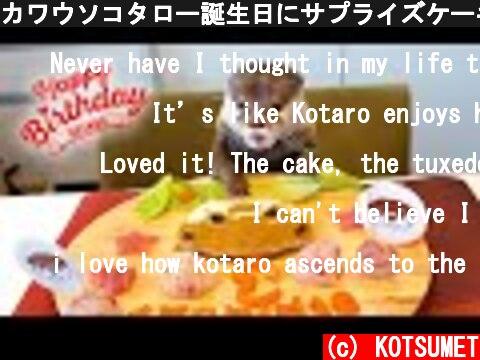 カワウソコタロー誕生日にサプライズケーキでフレンチパーティー! Otter Kotaro Happy Birthday Cake Surprise Party!  (c) KOTSUMET