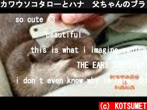 カワウソコタローとハナ 父ちゃんのブラッシングでとろける Otter Kotaro&Hana So Comfy  (c) KOTSUMET