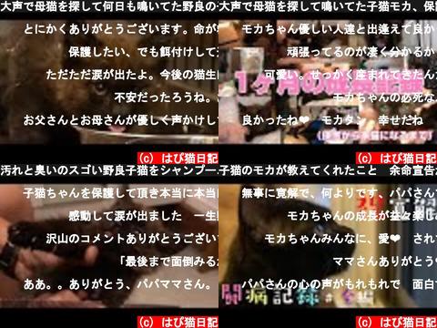 はぴ猫日記(おすすめch紹介)