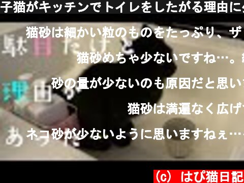 子猫がキッチンでトイレをしたがる理由に少し納得 223話  (c) はぴ猫日記