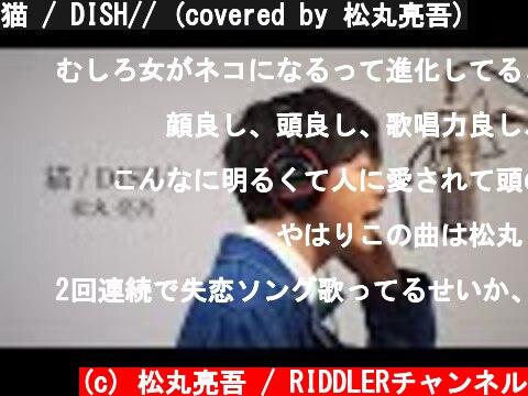猫 / DISH// (covered by 松丸亮吾)  (c) 松丸亮吾 / RIDDLERチャンネル