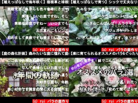 rui バラの庭作り(おすすめch紹介)