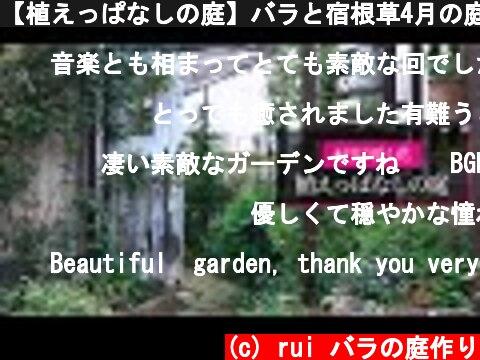 【植えっぱなしの庭】バラと宿根草4月の庭   (c) rui バラの庭作り