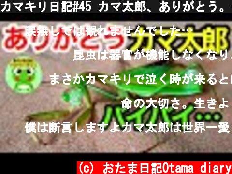 カマキリ日記#45 カマ太郎、ありがとう。~2020年と2021年を生きたカマキリ~【byおたま日記】  (c) おたま日記Otama diary