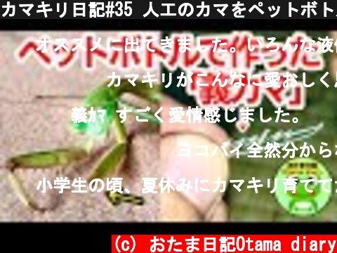 カマキリ日記#35 人工のカマをペットボトルで作ってみたのですが・・(12月12日-14日)【byおたま日記】  (c) おたま日記Otama diary