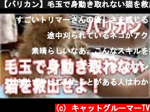【バリカン】毛玉で身動き取れない猫を救出せよ!【音量注意】  (c) キャットグルーマーTV