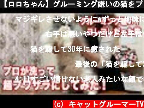 【ロロちゃん】グルーミング嫌いの猫をプロが洗って超フワフワのサラサラにしてみた【エキゾチックLH】  (c) キャットグルーマーTV