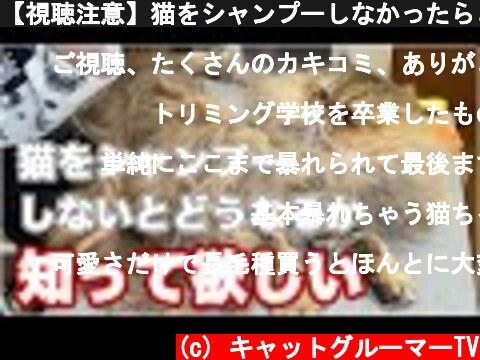 【視聴注意】猫をシャンプーしなかったらどうなるか知ってほしい  (c) キャットグルーマーTV