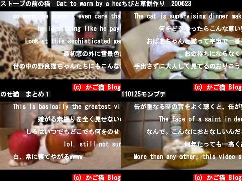 かご猫 Blog(おすすめch紹介)