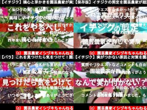 園芸農家イシヅキちゃんねる(おすすめch紹介)