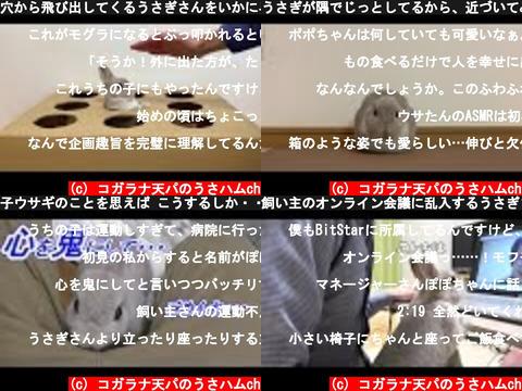 コガラナ天パのうさハムch(おすすめch紹介)