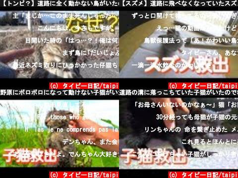 タイピー日記/taipi(おすすめch紹介)