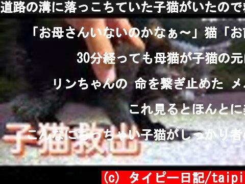道路の溝に落っこちていた子猫がいたので救出してみたら...  (c) タイピー日記/taipi
