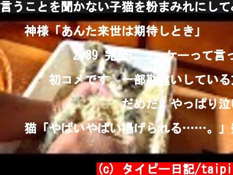 言うことを聞かない子猫を粉まみれにしてみた #3  (c) タイピー日記/taipi