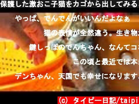 保護した激おこ子猫をカゴから出してみると。。#5  (c) タイピー日記/taipi