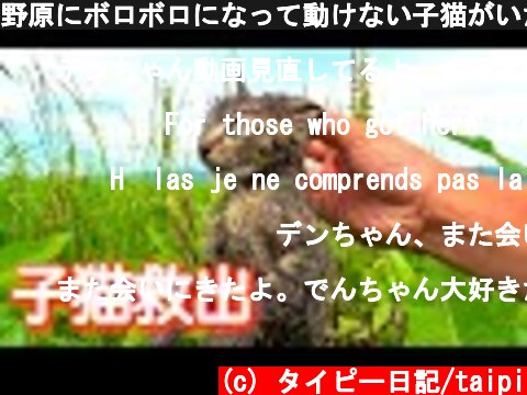 野原にボロボロになって動けない子猫がいたので救出した結果。。#1  (c) タイピー日記/taipi