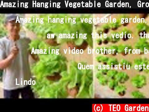 Amazing Hanging Vegetable Garden, Growing Vegetables in Dry Coconut Shell  (c) TEO Garden