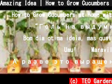 Amazing Idea | How to Grow Cucumbers at Home with Many Fruits, Extremely Easy  (c) TEO Garden