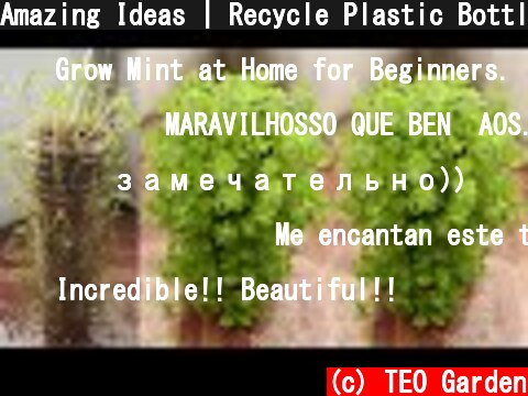 Amazing Ideas | Recycle Plastic Bottles to Grow Mint at Home for Beginners  (c) TEO Garden