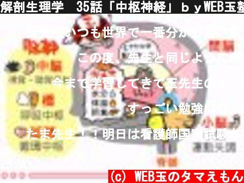 解剖生理学 35話「中枢神経」byWEB玉塾  (c) WEB玉のタマえもん
