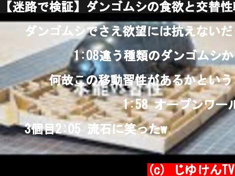 【迷路で検証】ダンゴムシの食欲と交替性転向反応どっちが強い!?【比較】  (c) じゆけんTV