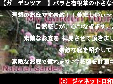 【ガーデンツアー】バラと宿根草の小さなナチュラルガーデン*5月中旬の庭の景色/ガーデニング  (c) ジャネット日和