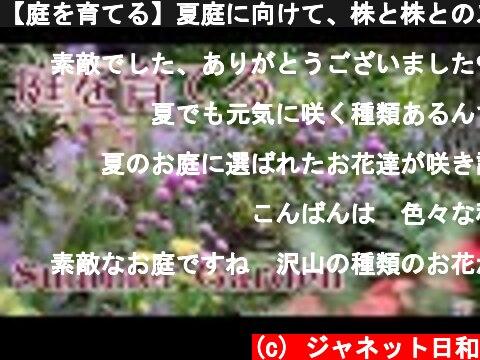 【庭を育てる】夏庭に向けて、株と株とのスペースを確認/植栽の追加を悩む/ナチュラルガーデン  (c) ジャネット日和