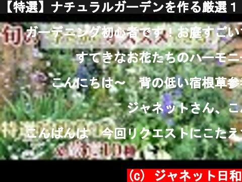 【特選】ナチュラルガーデンを作る厳選14種*旬の今だからオススメできる春の花/5年以上生育の宿根草/ネコと庭とガーデニング  (c) ジャネット日和