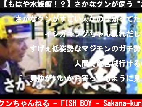 """【もはや水族館!?】さかなクンが飼う""""お魚""""って…  (c) さかなクンちゃんねる - FISH BOY - Sakana-kun"""