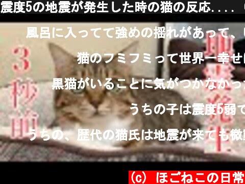 震度5の地震が発生した時の猫の反応.... Cat reaction when an earthquake occurs  (c) ほごねこの日常