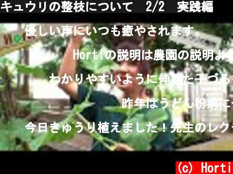 キュウリの整枝について 2/2 実践編  (c) Horti